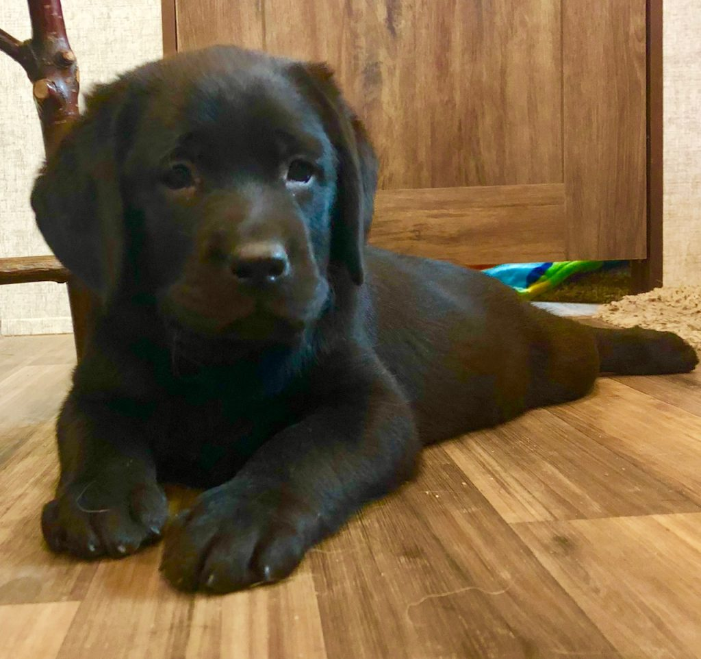 Dixie puppy girl
