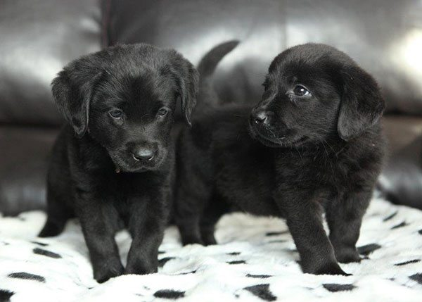 Puppies_image2